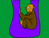 Coloring page Uakari painted byulises