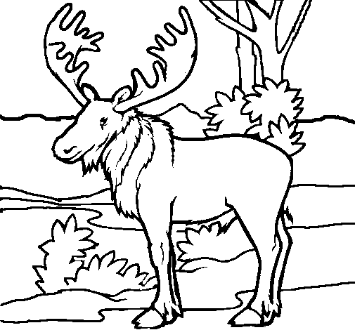 Coloring page Moose painted byyuan