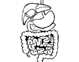 Coloring page Intestines painted byalan