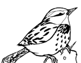 Coloring page Wren painted byyuan