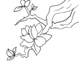 Coloring page Almond flower painted byumbrella