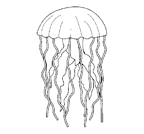 Coloring page Jellyfish painted byemel
