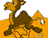 Coloring page Camel painted byzasdcxccdfcvfgbgghhbnnv