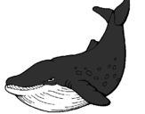Coloring page Killer whale painted byzz