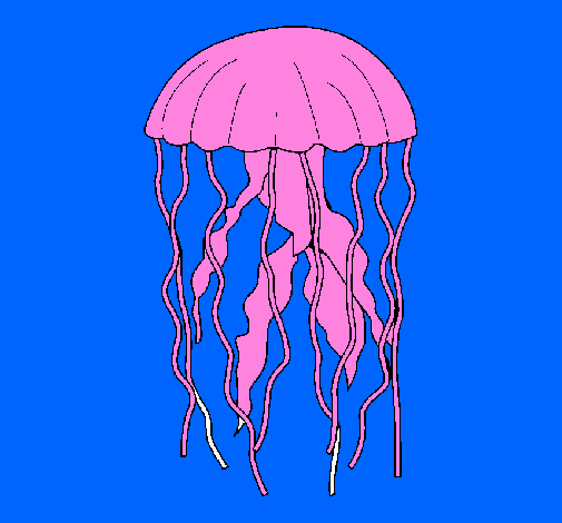 Coloring page Jellyfish painted bymorgan miller