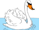 Coloring page Swan in water painted byArmands