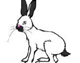 Coloring page Hare painted byDora
