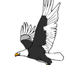 Coloring page Eagle flying painted byanonymous