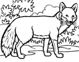 Coloring page Fox painted bymf