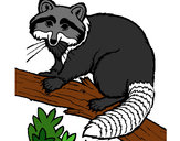 Coloring page Raccoon painted bykevinsuch
