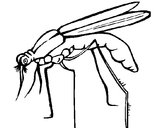 Coloring page Mosquito painted byannie