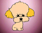 Coloring page Puppy poodle painted bymaja5