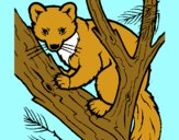 Coloring page Pine marten in tree painted byCherokeeGl