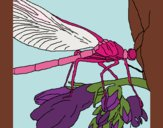 Coloring page Dragonfly painted byfawnamama1
