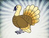 Coloring page Common turkey painted byfawnamama1