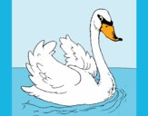 Coloring page Swan in water painted byAnia
