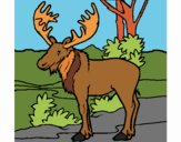 Coloring page Moose painted byPiaaa
