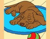 Coloring page Sleeping dog painted byLornaAnia
