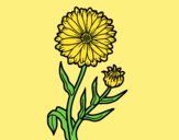 Coloring page Pot marigold painted byLornaAnia