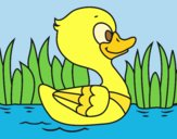 Coloring page River duck painted byANIA2