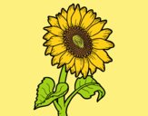 Coloring page Sunflower flower painted byAnitaR