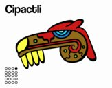 The Aztecs days: the Caiman Cipactli