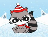 Warm raccoon