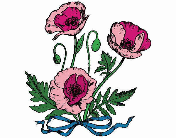 Some poppies
