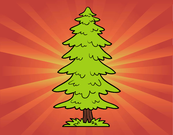 Great fir tree