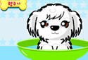 Play to The puppy of the category Girl games